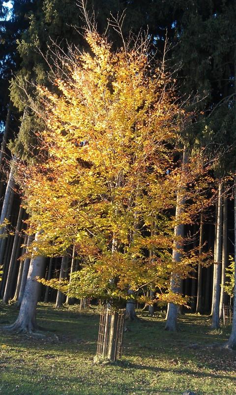 Baum im bayerischen Wald